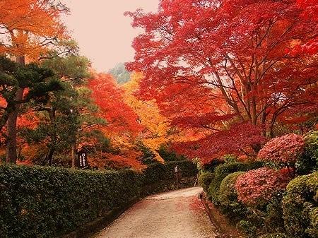 フィリピンからの便り⑧「京の秋」-No.000(資料写真)